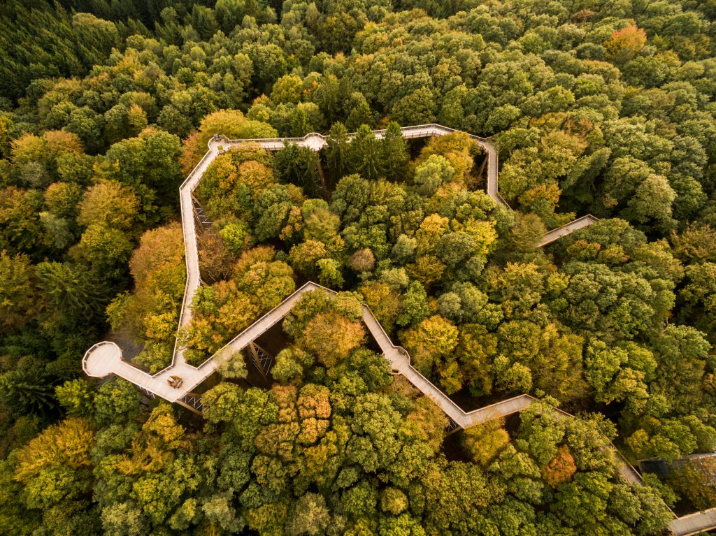 O circuito junto à copa das árvores (foto D.Ketz/divulgação Panarbora)