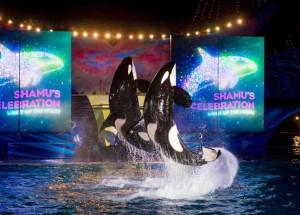 Shows ao vivo no SeaWorld e festa noturna no Aquatica marcam o verão em Orlando (FL)