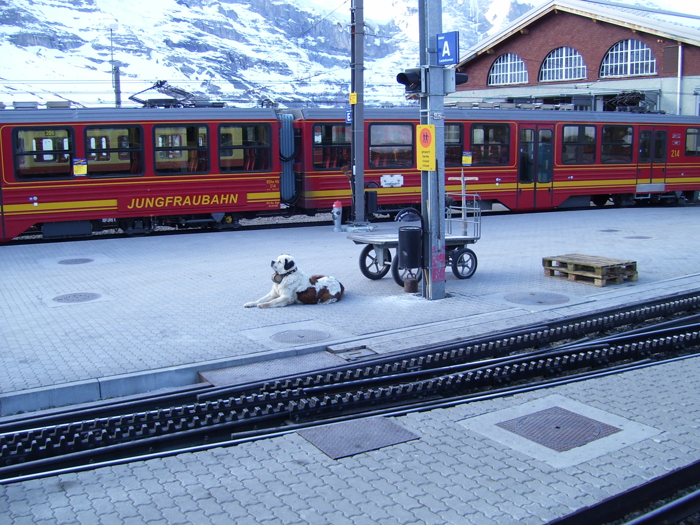 Jungfrau,_Swiss_Alps,_Dog_Station